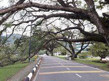 Une route scénique avec la rangée des raintrees près d'un lac images libres de droits