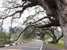 Une route scénique avec la rangée des raintrees près d'un lac photographie stock libre de droits