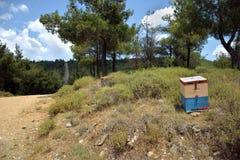 Une ruche dans Seih Sou Photographie stock libre de droits