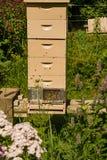 Une ruche de cinq piles photos libres de droits