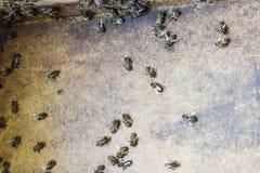 Une ruche, une vue de l'intérieur L'abeille-hutte l'instruction-macro d'isolement par miel détaillé par abeille a empilé très le  Images stock