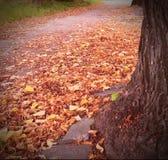 Une rue d'automne Photo stock