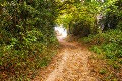 Une ruelle de pays dans la réserve naturelle du bois antérieure, Crowhurst, le Sussex est, Angleterre photographie stock libre de droits