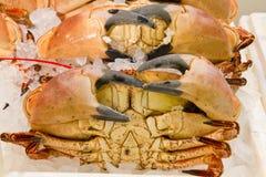 Une sélection des crabes frais Photo stock