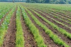 Une série de champ plantant, les terres cultivables labourées, okuchit a traité les champs agricoles Photos libres de droits