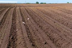 Une série de champ plantant, les terres cultivables labourées, okuchit a traité les champs agricoles Photographie stock libre de droits