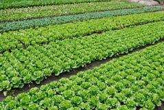 Une série de légumes et traçages de légume photo libre de droits