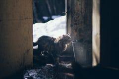 Une scène atmosperic dans le village avec un vieux chat présentant une vieille maison avec le plancher humide et un seau dans le  Image libre de droits