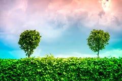 Une scène d'été des buissons brillamment verts, haie cisaillée avec de petits arbres là-dessus photographie stock libre de droits