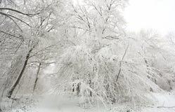 Une scène d'hiver du sentier piéton et des arbres couverts dans la neige en bois de boules, bruyère de Hertford, R-U Photo libre de droits