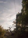 Une scène de pays avec un pylône a submergé avec les arbres dehors Images stock