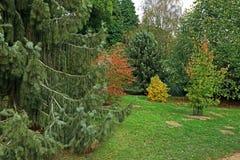 Une scène de région boisée avec les beaux et colorés arbres de l'automne image libre de droits