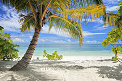 Une scène des palmiers et de la plage Photos libres de droits