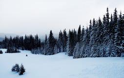 Une scène neigeuse d'hiver avec la neige en baisse de la région carpathienne, Ukraine, l'Europe Image libre de droits