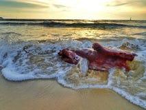 Une sculpture en bois de flottage, créée du bois lavé sur la plage pendant la marée basse avec le beau fond de coucher du soleil image stock