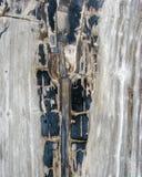 Une section de coupe de croix de bois de Fosillized Image stock