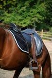 Une selle sur le cheval photos stock