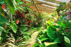 Une serre chaude complètement des plantes tropicales et des fleurs images stock
