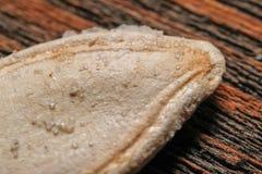 Une seule pièce des graines de citrouille rôties et salées photos stock