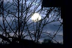 Une silhouette éclairée par la lune d'une branche d'arbre photos libres de droits