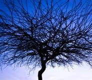 Une silhouette d'arbre dans le ciel égalisant images stock