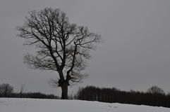 Une silhouette d'un arbre images libres de droits