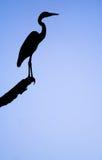 Une silhouette d'un héron Photos libres de droits