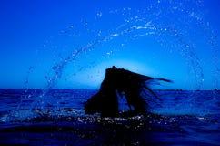 Une sirène émerge de la mer et du x28 ; 9& x29 ; Image libre de droits