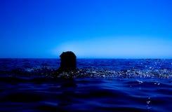 Une sirène émerge de la mer et du x28 ; 12& x29 ; Photos libres de droits