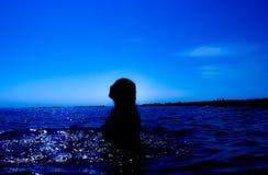 Une sirène émerge de la mer et du x28 ; 23& x29 ; Photo stock