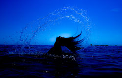 Une sirène émerge de la mer et du x28 ; 2& x29 ; Image libre de droits