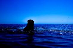 Une sirène émerge de la mer et du x28 ; 13& x29 ; Photos libres de droits