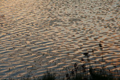 Une soirée agréable par le lac Photographie stock libre de droits
