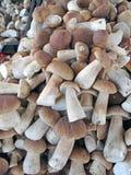 Une stalle de marché libre montrant les champignons sélectionnés sauvages Photographie stock libre de droits