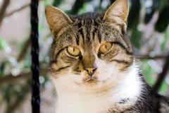 Une tête de chat de rue, nous regardant image libre de droits