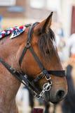Une tête de cheval. Image libre de droits