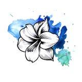 Une tache informe bleue lumineuse d'aquarelle Symbole graphique à traits fleur d'encre d'Amaryllis Illustration Libre de Droits