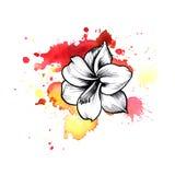 Une tache informe rouge lumineuse d'aquarelle Symbole graphique à traits fleur d'encre d'Amaryllis Illustration Libre de Droits