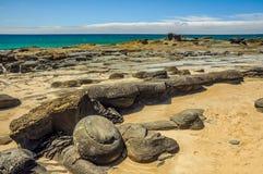 Une tache surfante préférée sur la Côte Pacifique australienne dans Apoll photo stock