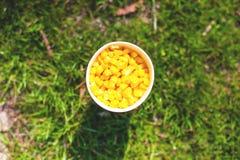 Une tasse de grains de maïs Images libres de droits