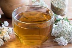 Une tasse de thé de millefeuille avec la millefeuille fraîche Photos stock