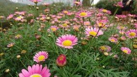 Une terre pleine des fleurs de haute plaine photo stock
