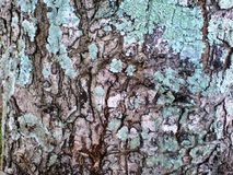 Une texture d'arbre Photos stock