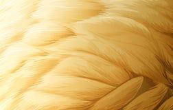 Une texture de plume Photos stock