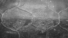 Une texture noire de la coquille de la tortue photographie stock libre de droits