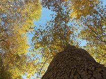 Une tige d'arbre en automne Photographie stock