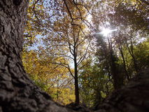 Une tige d'arbre en automne Photo libre de droits
