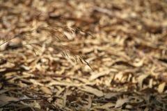 Une tige dans les feuilles de fond tombées photo libre de droits