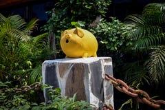 Une tirelire en plastique jaune sur une pastenague dans une jungle Images libres de droits