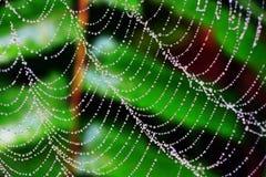 Une toile d'araignée Photos stock